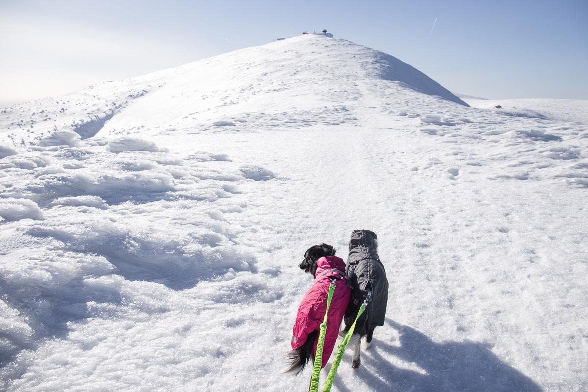 Výšlap se psem na Sněžku