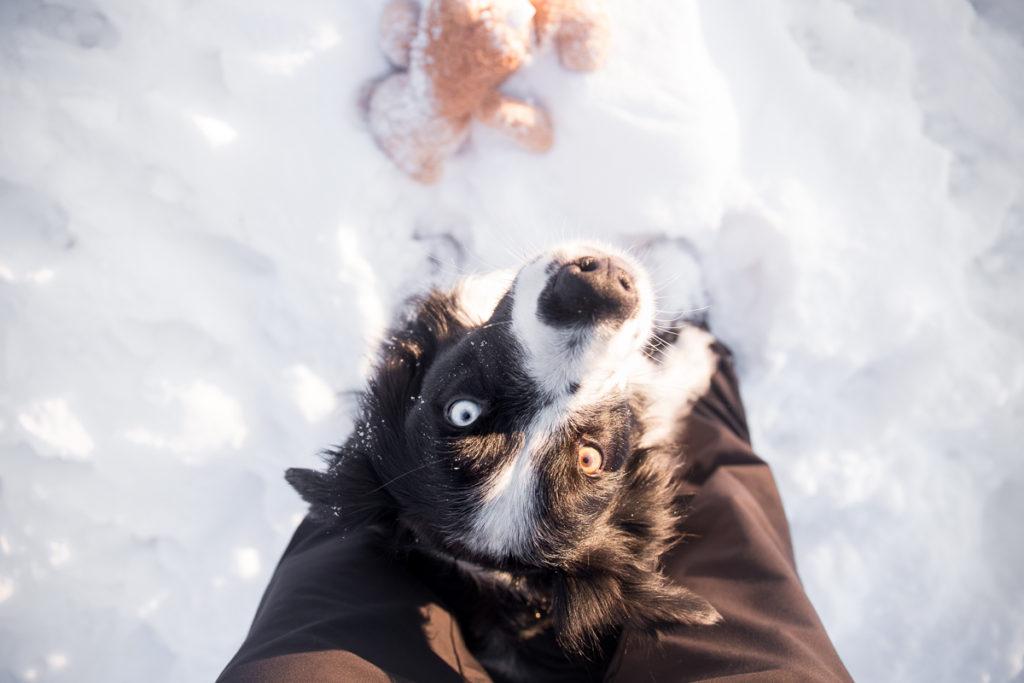 Jak naučit psa nové triky