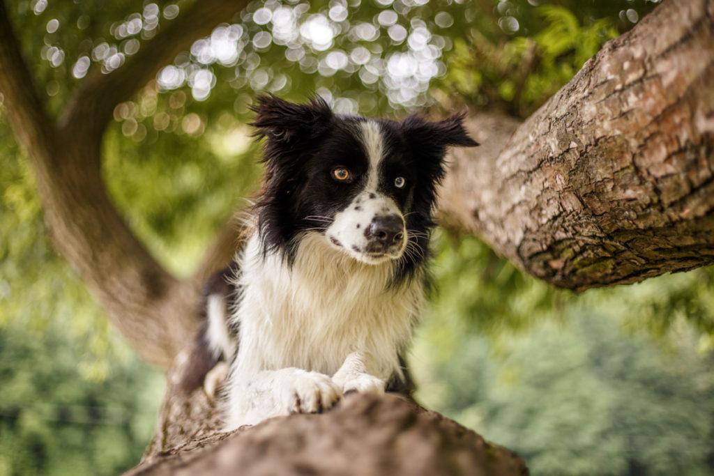 Jak vyfotit psa