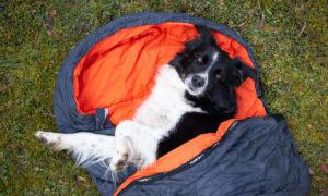 Ubytování se psem Krkonoše