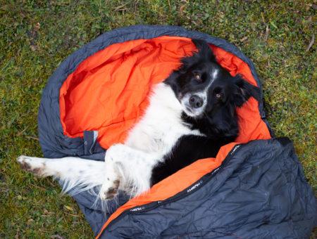 Ubytování se psem Jeseníky