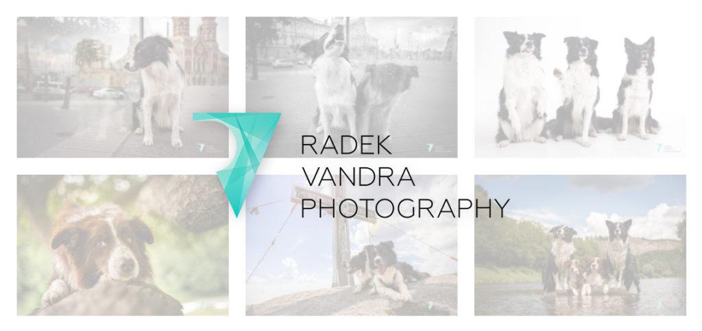 Radek Vandra Photography - Focení psů