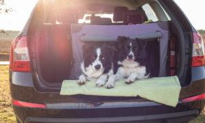 Na dovolenou se psem