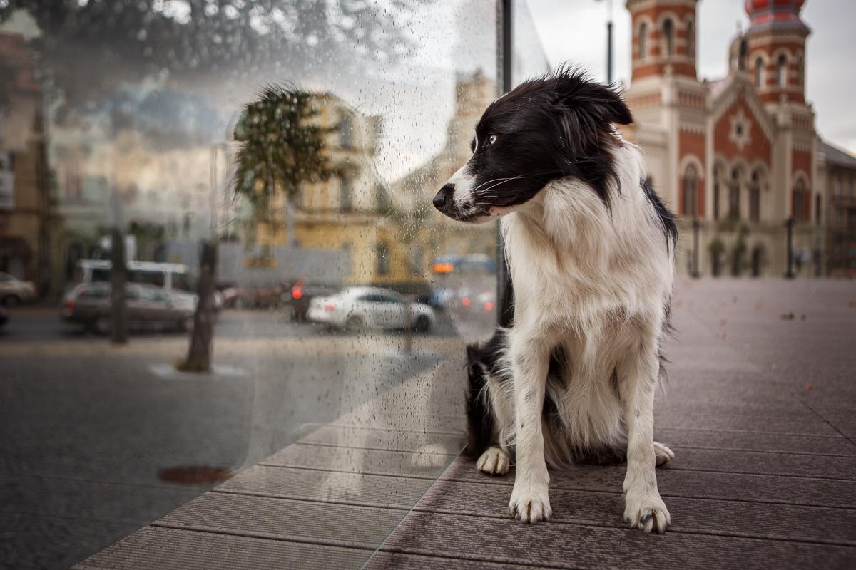 Procházka v dešti se psem