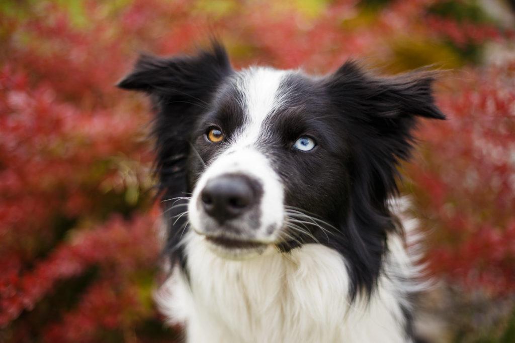 Jak fotit psy