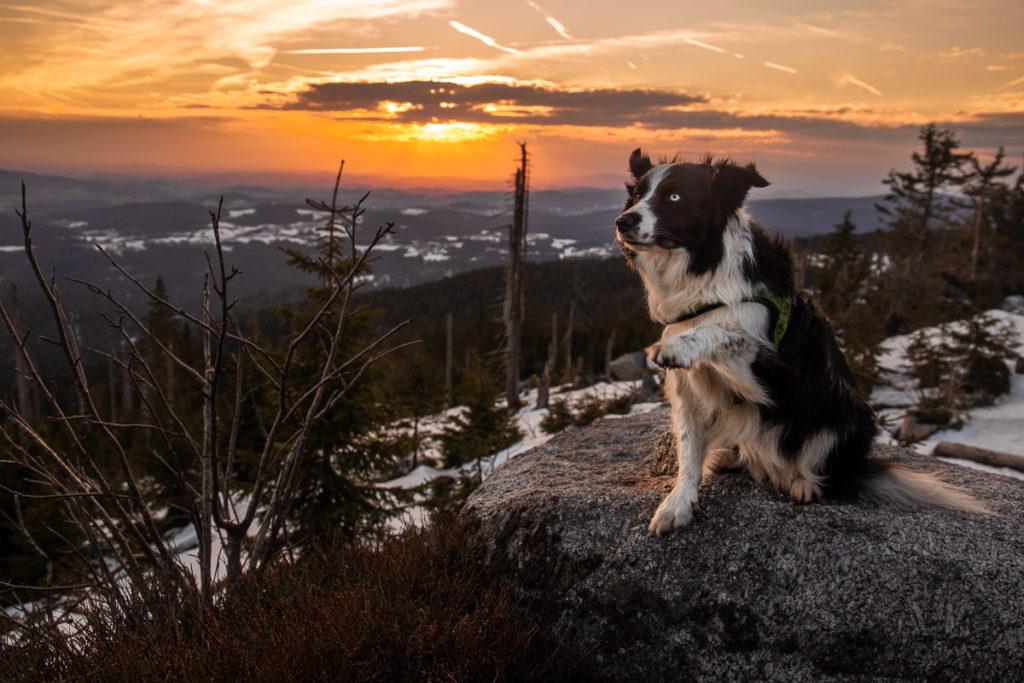Západ slunce na Třístoličníku se psy