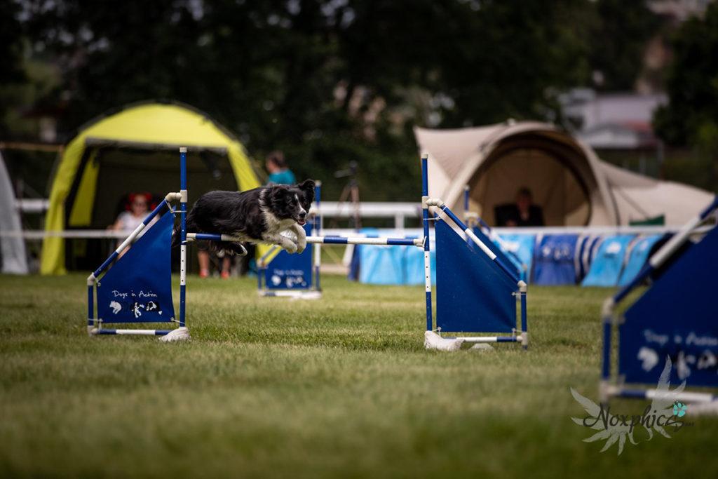 Kvalifikační závody na Mistrovství České republiky v agility 2019 Mladá Boleslav