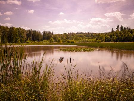 Kokotské rybníky a pramen Čůráček