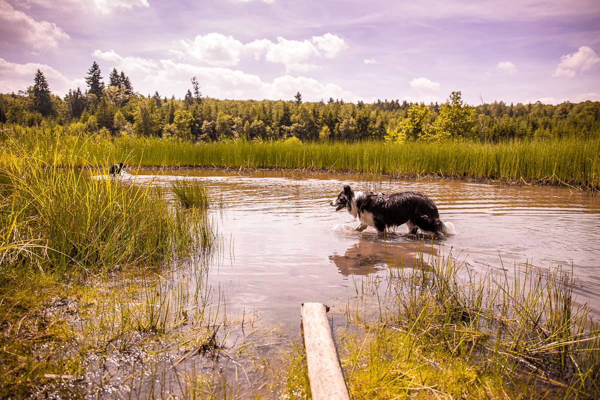 Dolní kokotský rybník