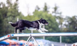 MČR v agility: Mé poprvé