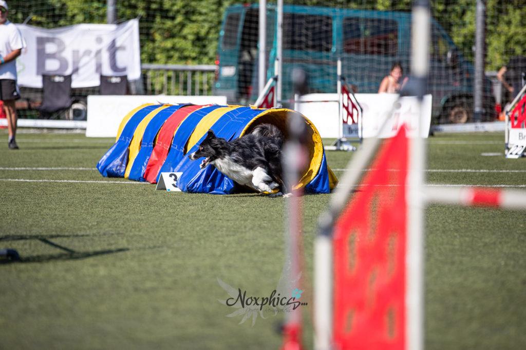 Mistrovství České republiky v agility 2019