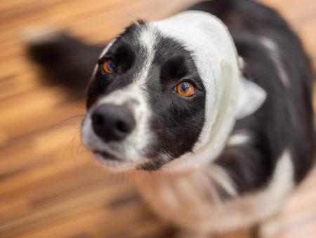První pomoc pro psa