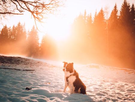 Za sněhem na šumavský Poledník