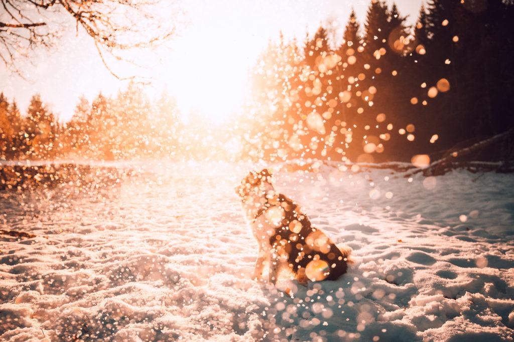 Za sněhem na šumavský Poledník - Prášily