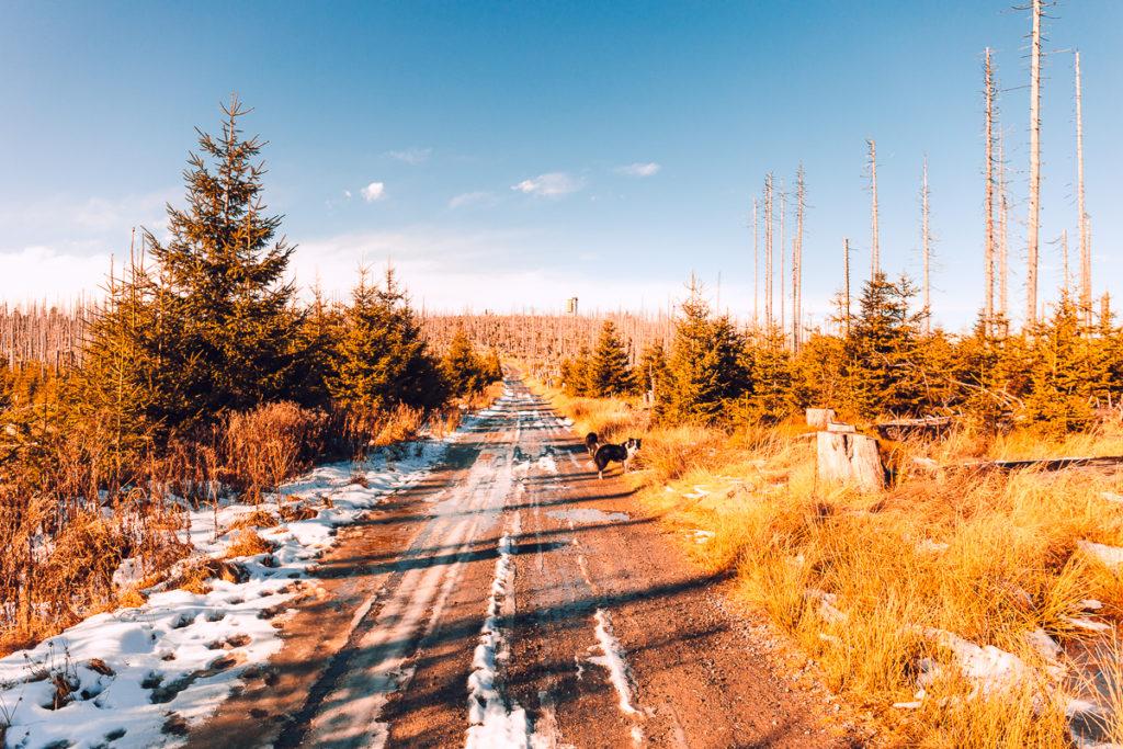 Za sněhem na šumavský Poledník - Poledník
