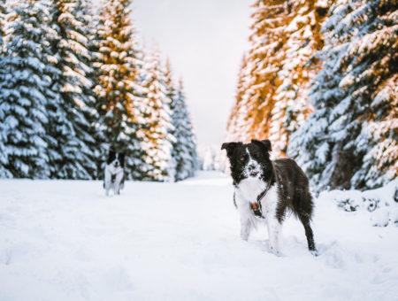 Jizerské hory se psem