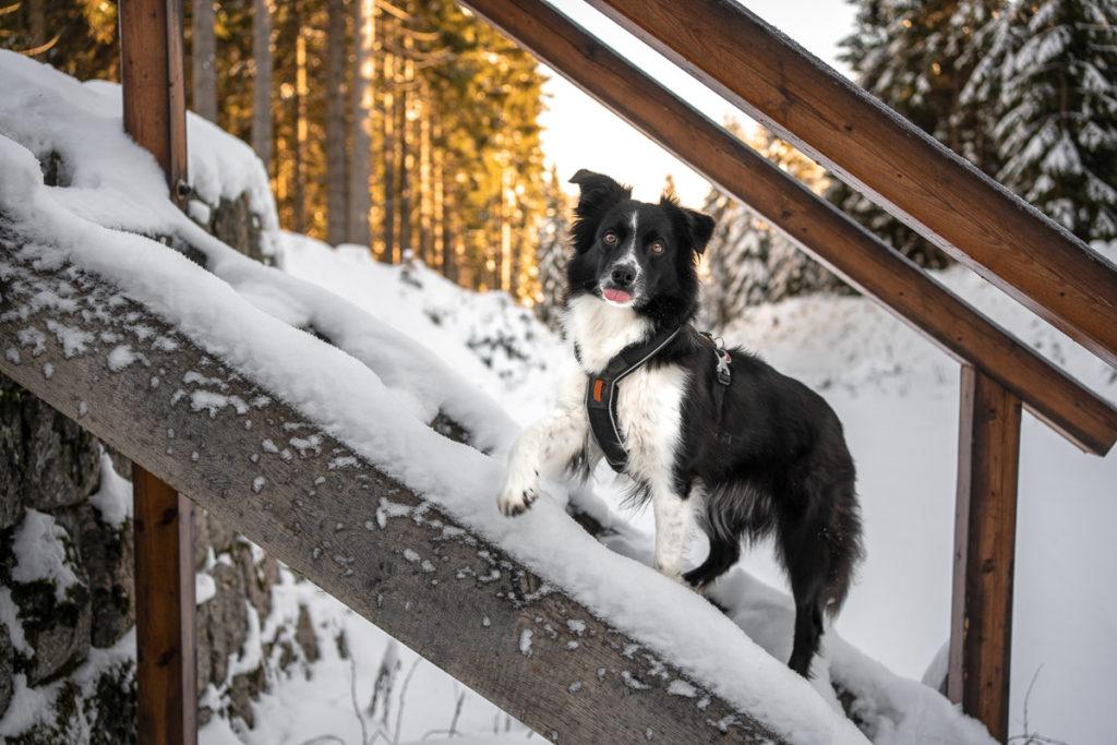 Jizerské hory se psem - Protržená přehrada Desná