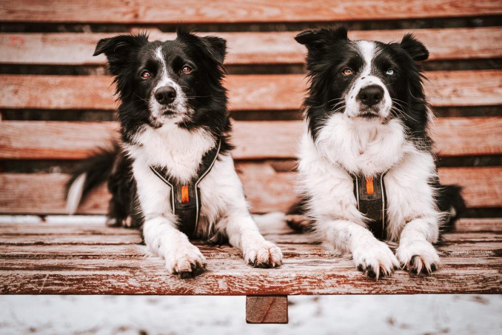 Šumava se psem - Černé a Čertovo jezero