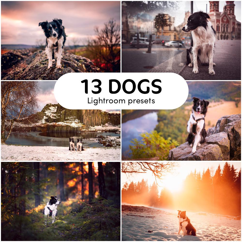 Fotografické presety pro Adobe Lightroom pro fotky se psy Greenmind.cz