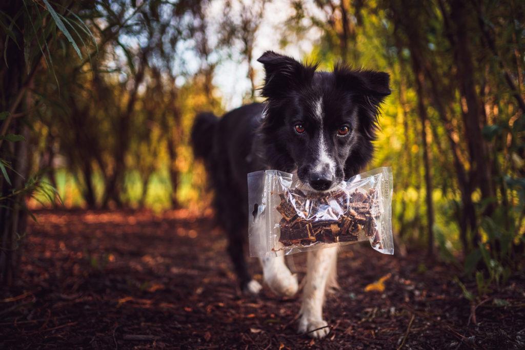 Co dělat, když pes nechce žrát?