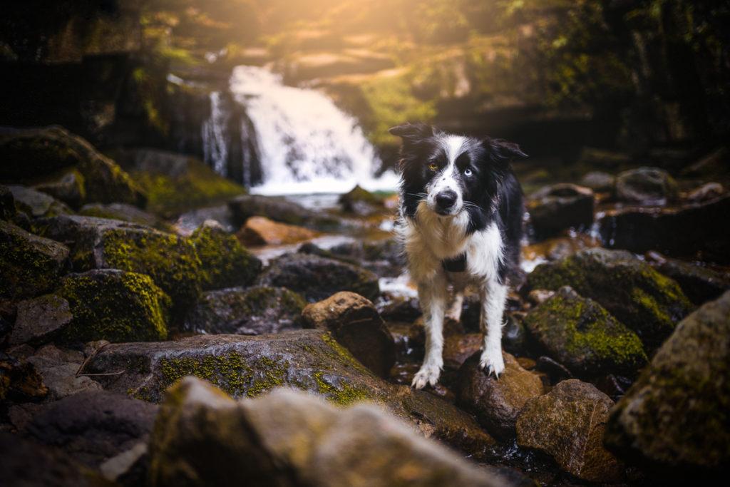 Lysá hora se psem - Satinské vodopády - Beskydy