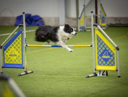 Jak se připravit na první agility závody