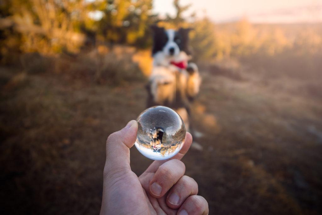 Šumava - Velký Ostrý - Greenmind.cz | Cestování se psem