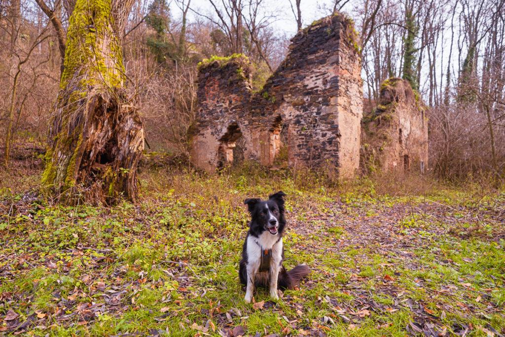 Kutná Hora - Tip na výlet - Greenmind.cz - Cestování se psem